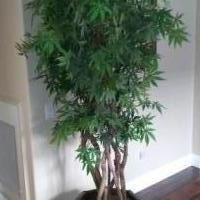 Artificial Japanese Maple for sale in Rocklin CA by Garage Sale Showcase member mbrumm, posted 11/02/2018