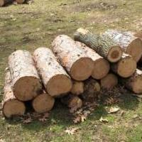 Wood, mostly pine for sale in Balsam Lake WI by Garage Sale Showcase member SallyRedding, posted 05/05/2019