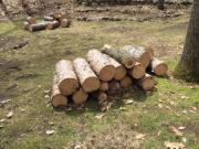 Wood, mostly pine for sale in Balsam Lake WI