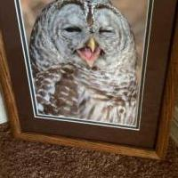 Winking Owl Photograph for sale in Naples FL by Garage Sale Showcase member CC111Nv20, posted 10/31/2019