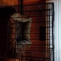 Dog cage for sale in Hyde Park VT by Garage Sale Showcase member broom1, posted 10/27/2019