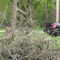 In search of branch and twig removal for sale in Utica NY by Garage Sale Showcase member LisaG54, posted 05/19/2020