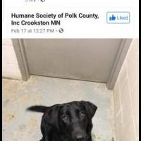 Lost Dog for sale in Polk County MN by Garage Sale Showcase member JudyHelpingDogs, posted 02/19/2020